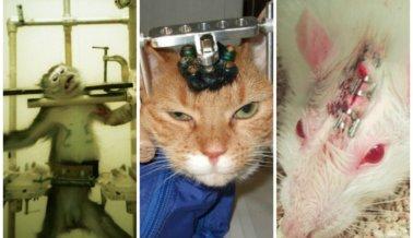 ¡Abominable! 6 horribles experimentos en animales que están sucediendo ahora mismo