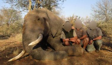 PETA Investiga Cómo el Presidente Sudafricano se Beneficia en Secreto de la Caza de Trofeos