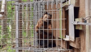 Ayuda a los Animales que Enloquecen en Waccatee Zoo   ¡Haz Algo Ahora!