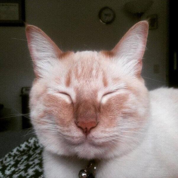 Walsh-cat