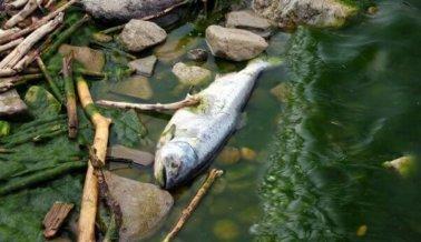 6 razones por las que comer pescado durante Semana Santa no es algo santo