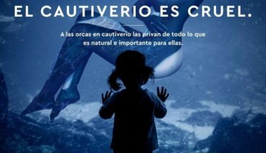 Marjorie de Sousa Está Harta de SeaWorld
