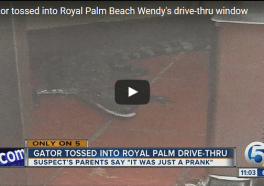 Man Arrested for Hurling Alligator Into Wendy's Drive-Through