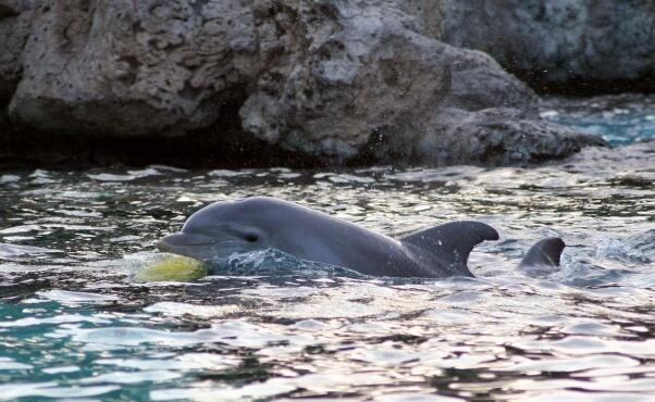 Wild-Dolphin