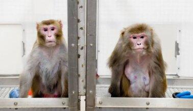 Experimentadores de UW-Madison Congelan Bebés Vivos, Hacen Pasar Hambre a los Animales