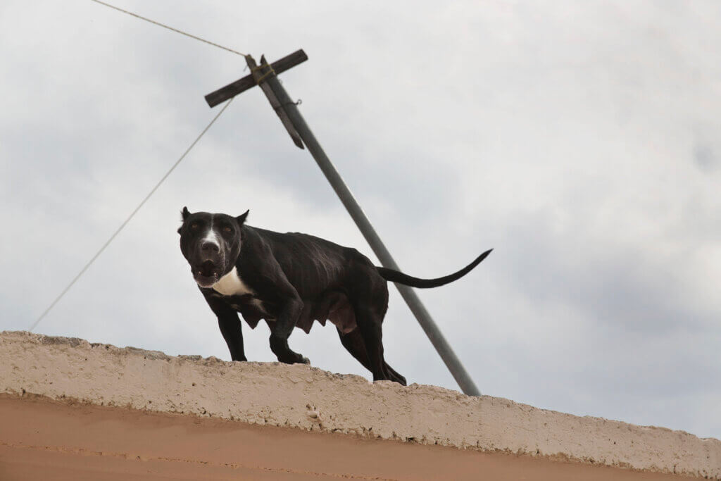 A dog on a roof, barking