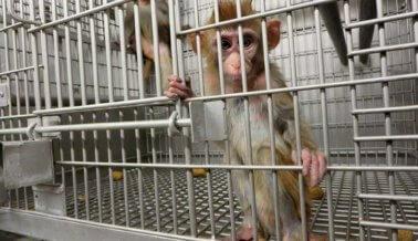 No te imaginas en dónde permite el gobierno que se experimente con Ébola en primates