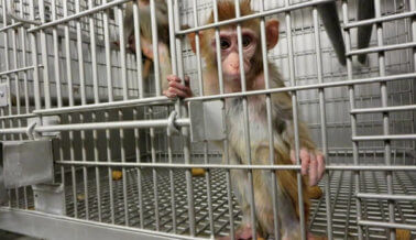 Las investigaciones más perturbadoras de PETA del 2015