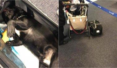 Perro muere luego de que tripulación de United presuntamente, lo puso en el compartimento superior