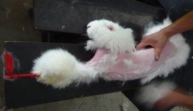 ¡Victoria! PETA persuade a BCBG Max Azria y BCBGeneration para que dejen de usar Angora y Pelaje