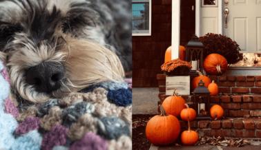 Consejos Para Mantener a los Animales a Salvo en Este Halloween