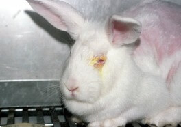 Top 5 Reasons to Stop Animal Testing