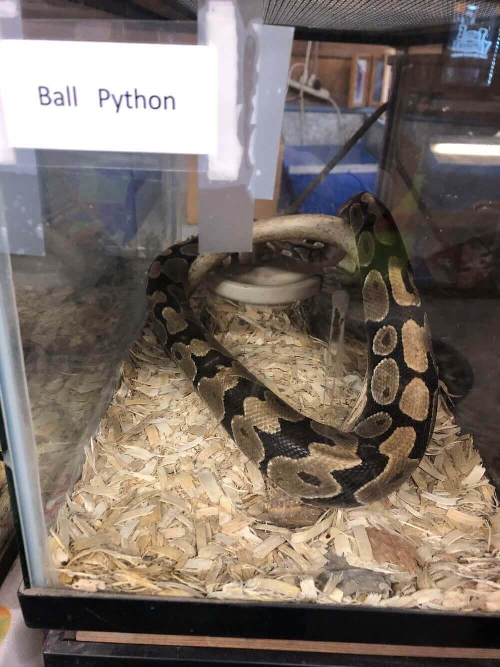 Python en un contenedor de plastico