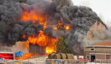 Imagina los últimos momentos de 2.7 millones de animales que murieron quemados