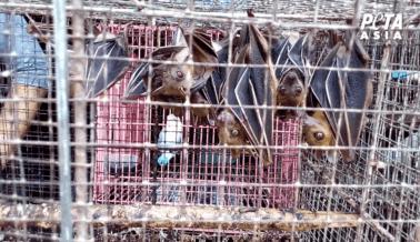 PETA Asia Está Atrayendo la Atención del Mundo Hacia los Mercados de Animales Vivos