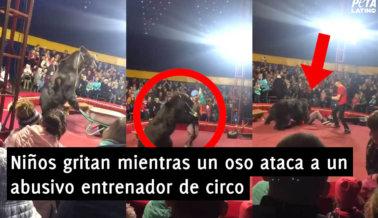 VIDEO: Niños Gritan Mientras un Oso Ataca a un Abusivo Entrenador de Circo