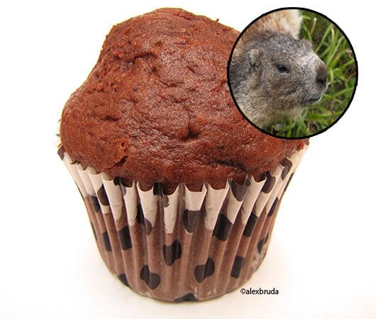beavers-genitals
