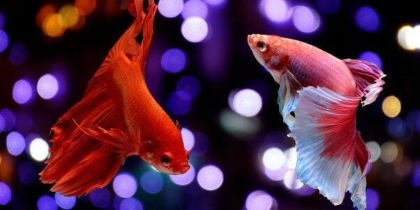 Que comen los peces de noche