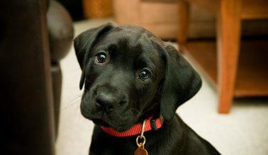 ¿Qué tipo de persona mataría de hambre a un cachorro?