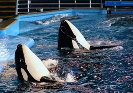 'Blackfish': The Documentary That Exposes SeaWorld