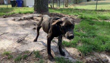 COVID-19: Animales Como Boe Nos Necesitan Más que Nunca