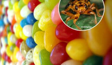 8 ingredientes repugnantes que no creerás que comes o vistes