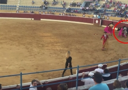 VIDEO: PETA Supporter Rushes to Assistance of Dying Bull in Albacete Bullring