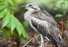 Bird Shot With Arrow Refuses to Give Up—and so Do We