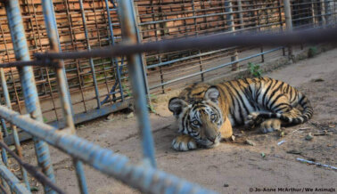 ¿Los Zoológicos de Carretera Ayudan a los Animales en Peligro de Extinción? Qué Debes Saber Sobre Conservación