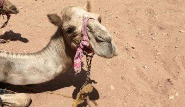 Animales Golpeados y Azotados en la 'Ciudad Perdida' de Petra