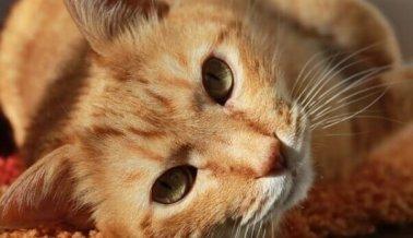¡Actúa ahora! Gatos asesinados para hacer abrigos con su piel