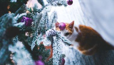 Mantén a los animales a salvo durante la época navideña