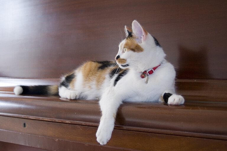 cat-on-piano