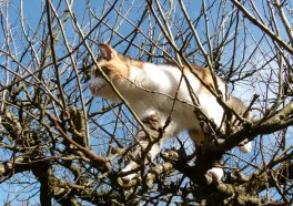 It Takes a Village to Save a Cat Trapped in a Tree