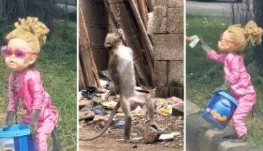 INDIGNANTE: Encadenar a un mono es perturbador y cruel