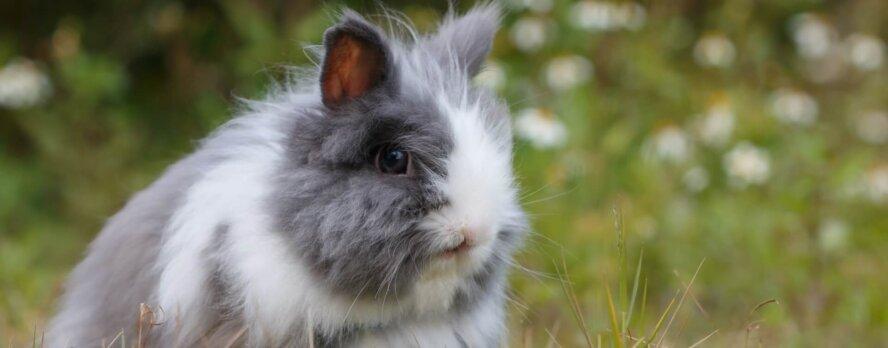 Programa global 'Belleza Sin Conejitos' de PETA