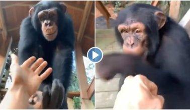 Zoológico de Carretera Myrtle Beach Explota Nuevamente a Chimpancé por Publicidad