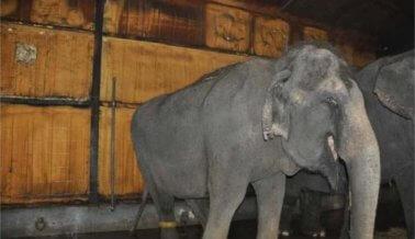 ¡Insta a Circus World a Terminar Con Las Exhibiciones de Elefantes!