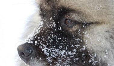 ¿Tiene frío tu cachorro? Mantén a tu perro caliente con estos consejos.