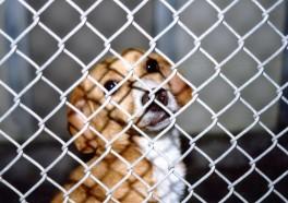 ¡Victoria! El NIH deja de financiar experimentos en perros perdidos y robados