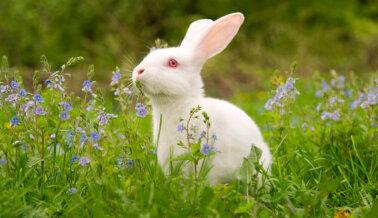 TRESemmé Deja de Experimentar en Animales en Todo el Mundo y se Une a la Lista 'Beauty Without Bunnies' de PETA