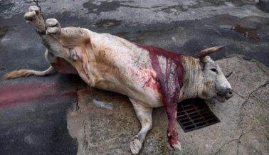 El Coronavirus Cancela las Sangrientas Corridas de Toros en México