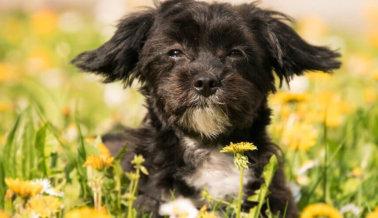 Ayuda Hoy a Innumerables Perros con Estas Acciones Rápidas y Fáciles