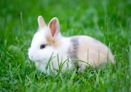 13 Things You May Not Know About Rabbits