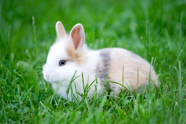 Baby Rabbit with blue Eye looking through Grass