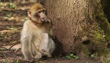 ¡Victoria! Philippine Airlines deja de transportar primates a laboratorios