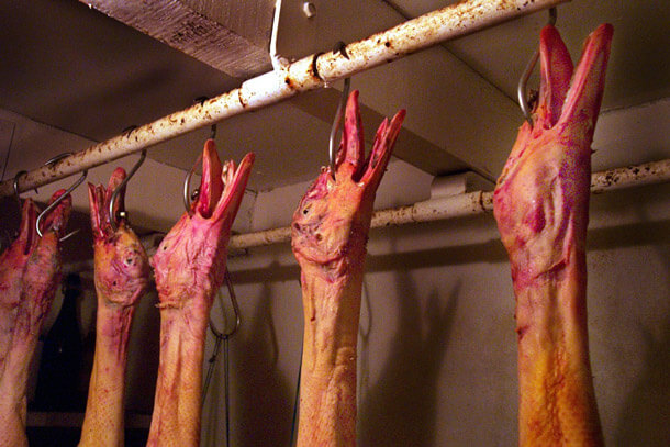 dead-geese-foie-gras-graphic
