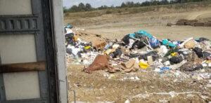dead horse in dumpster
