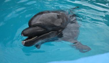 ÚLTIMO MOMENTO: Otro CEO Huye de SeaWorld, el Barco que se Hunde