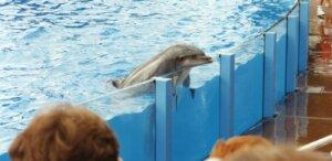delfin confinado en tanque en un parque marino